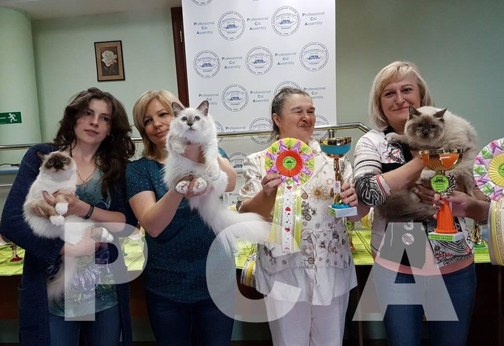 Налог на домашних животных в россии 2021: правда будет или нет?