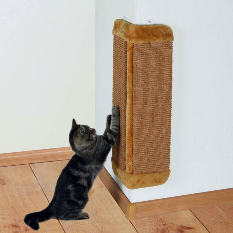 Как приучить котёнка, кота или кошку к когтеточке — советы профессионалов