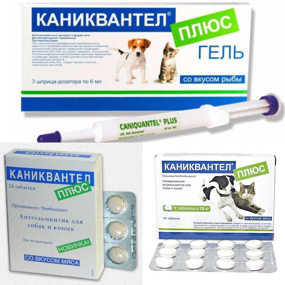 Каниквантел для собак: инструкция по применению, цена, отзывы