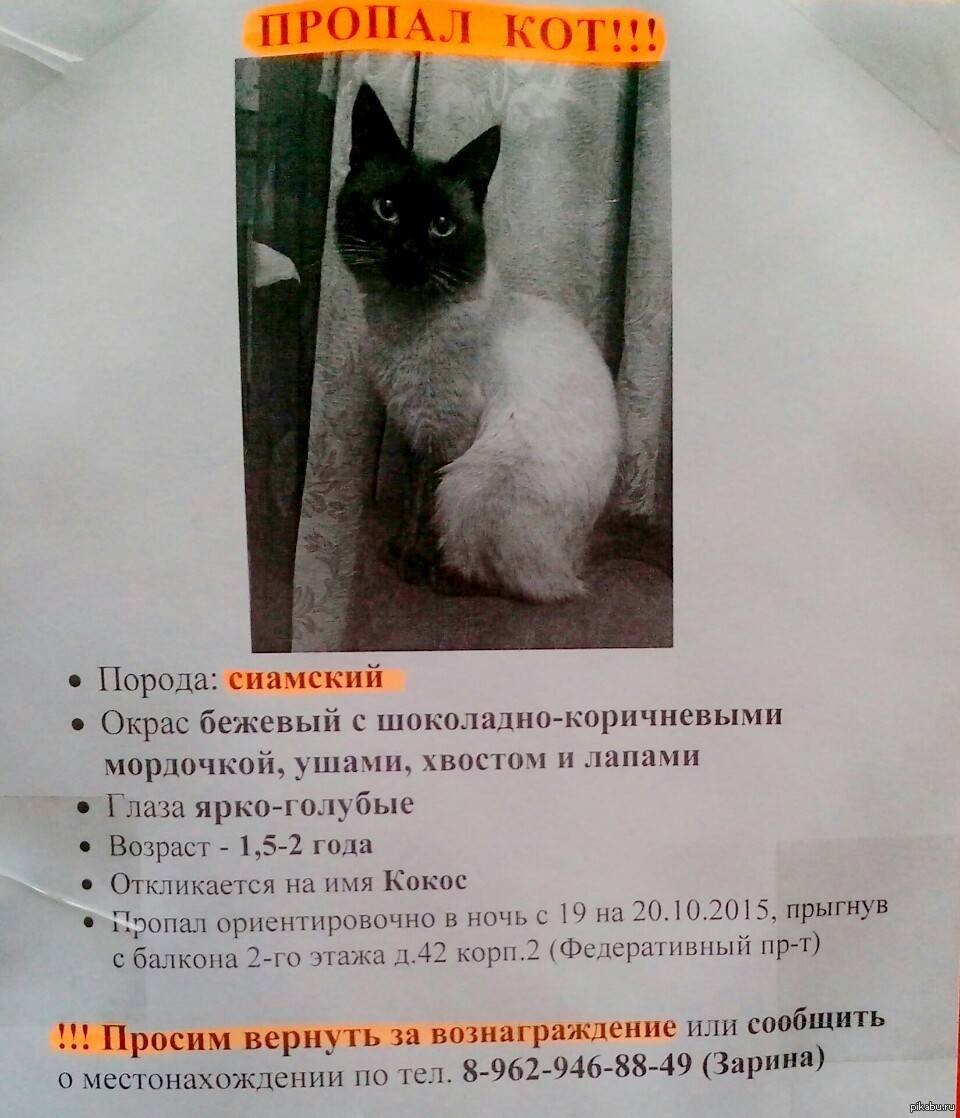 Что делать, если пропал кот