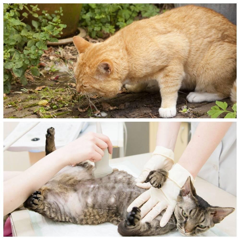 Отравление у кошки — симптомы