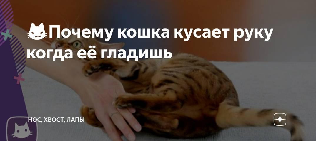 12 советов как отучить котёнка царапаться и кусаться