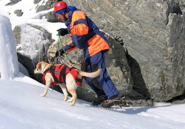 Бочонок на шее сенбернара: что несёт собака-спасатель замерзающим в снегах