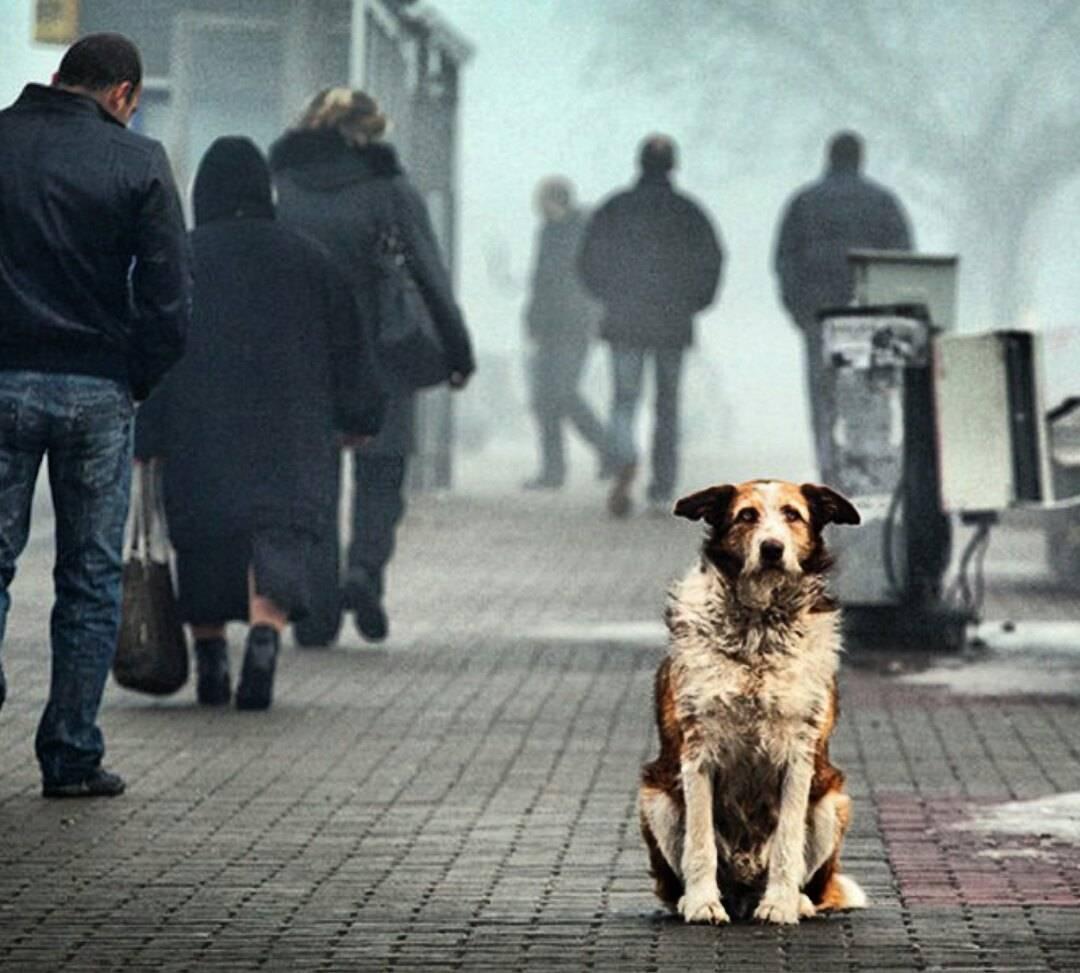 Зачем кошка будит хозяина по ночам - gafki.ru