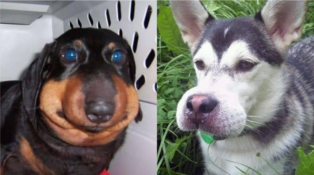 Что делать если собаку укусила пчела? | блог на vetspravka.ru