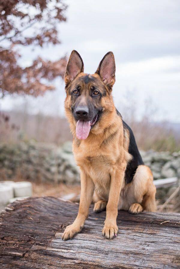 Мелкие породы собак. описание, названия, виды и фото мелких пород собак | живность.ру