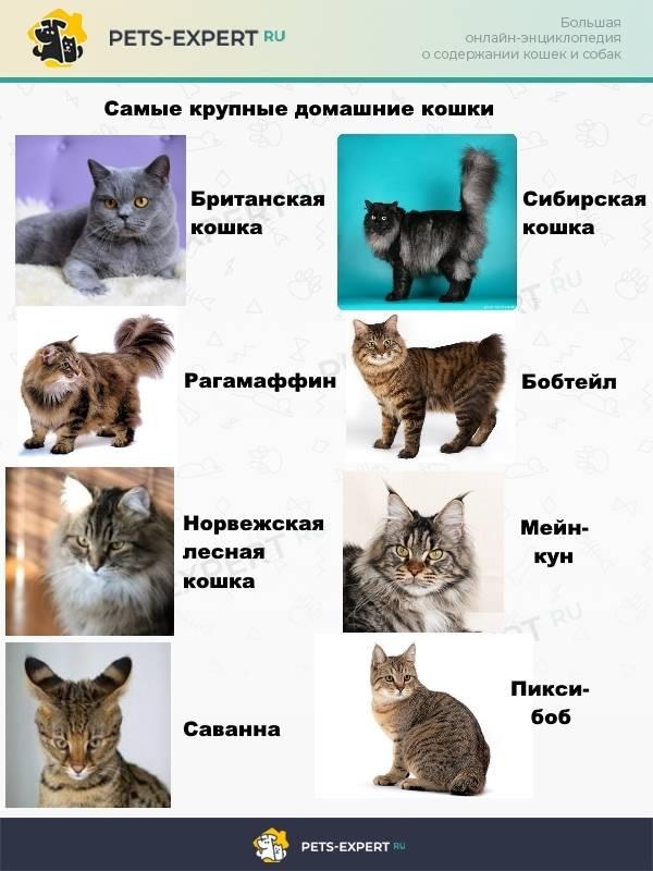 До какого возраста растут коты и кошки: факторы, этапы роста