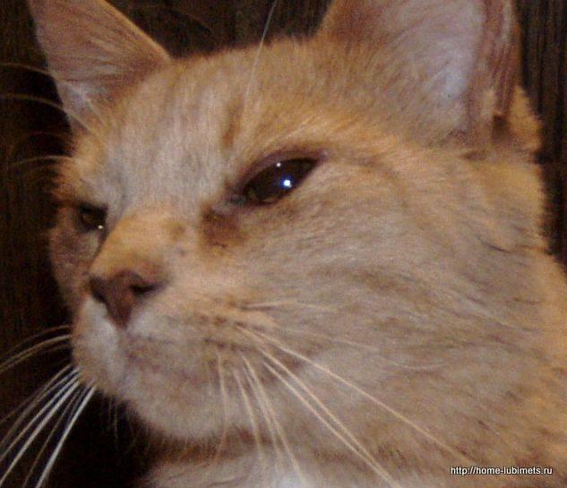 Заболевания носовой полости у кошек