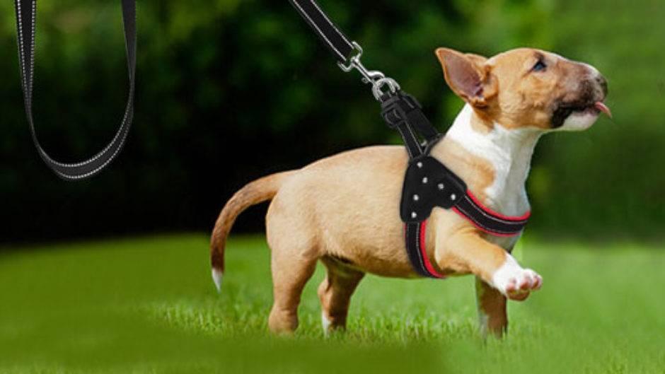 Как отучить собаку метить дома и в общественных местах: советы и народные средства