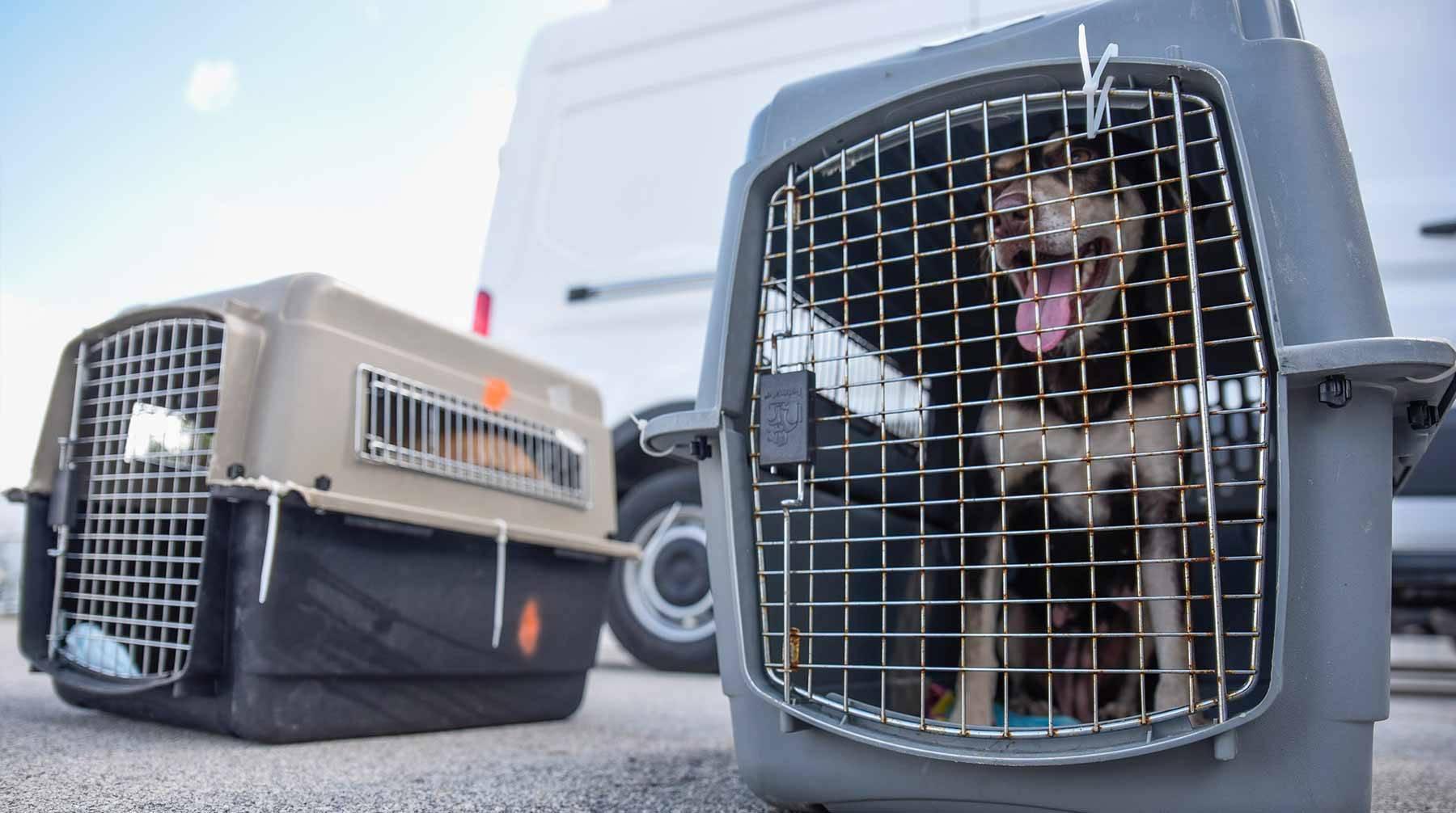 Перевозка собак в самолете по россии, туристу на заметку