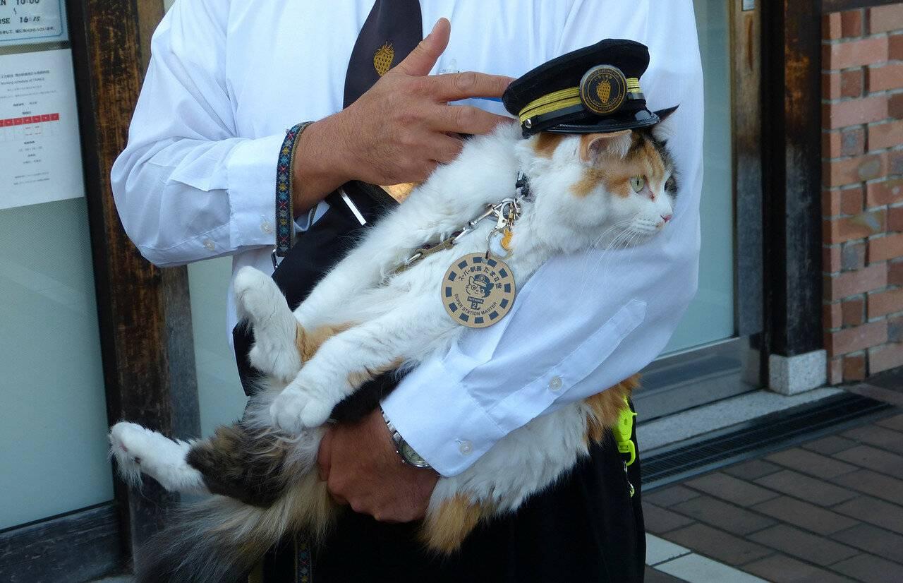 Жители мелитополя пожаловались на спасателей в «операции» по спасению кошки (фото)