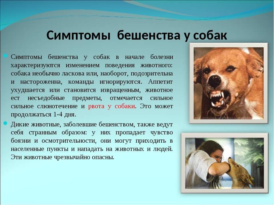 Бешенство: что нужно знать владельцу животного