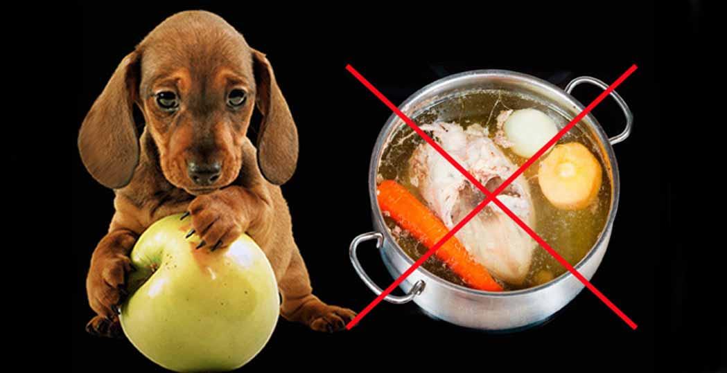 """Можно ли собаке кости: рекомендуемые продукты для разгрызания   блог ветклиники """"беланта"""""""