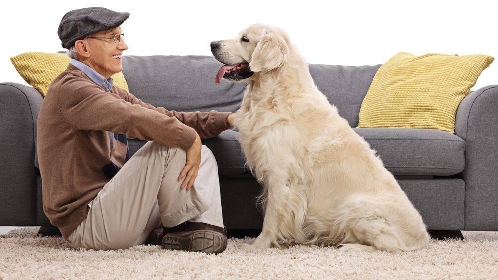Как продлить жизнь любимому домашнему животному