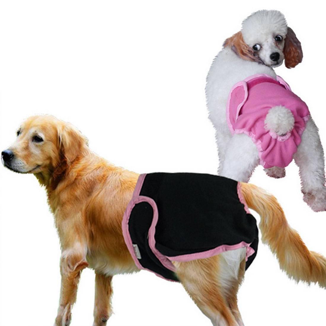 Как выбрать породу собак: лучшая маленькая для квартиры по характеристикам, подходящая для частного дома, первая для ребенка, мелкая для новичка