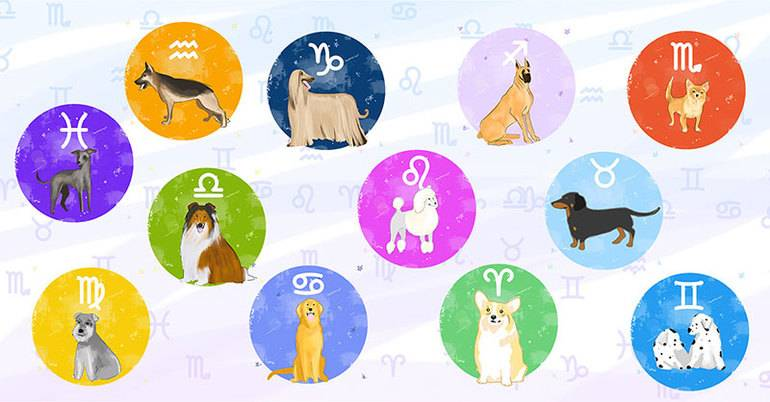 Каждому знаку зодиаку соответствует свое духовное животное: описание каждого