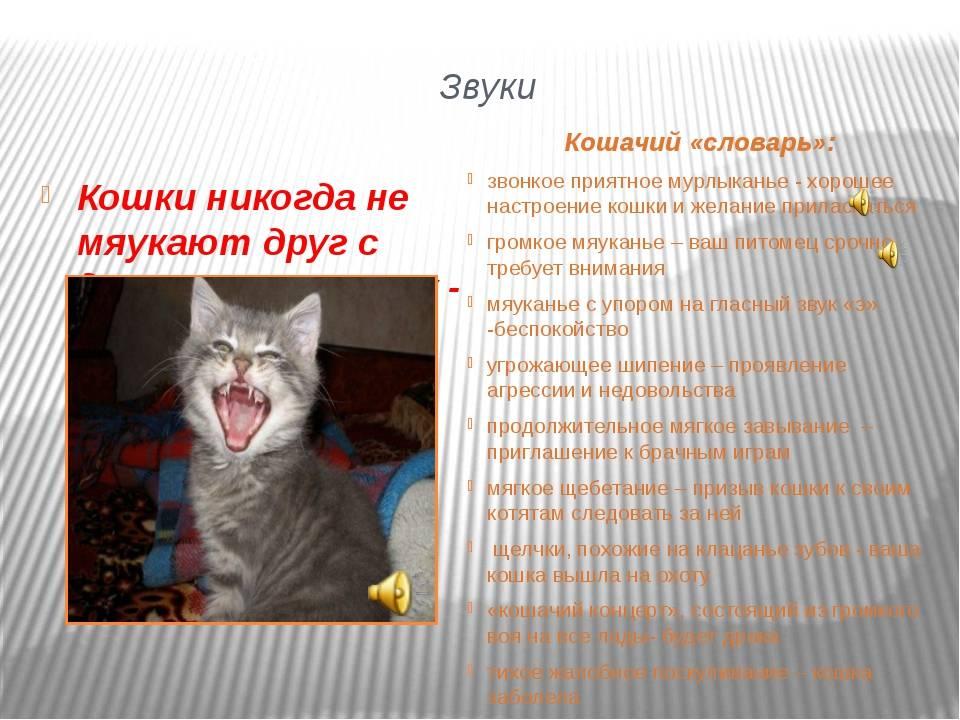 12 звуков, которые издает кот, и что они означают
