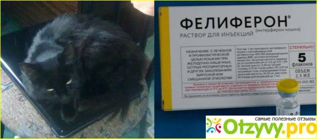 Новое в лечении кошачьего инфекционного перитонита