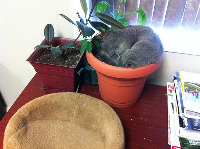 Sos!!!  кошка ест домашние цветы.