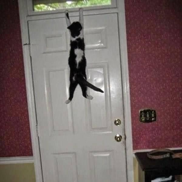 5 лучших советов отучить кошку выбегать в подъезд
