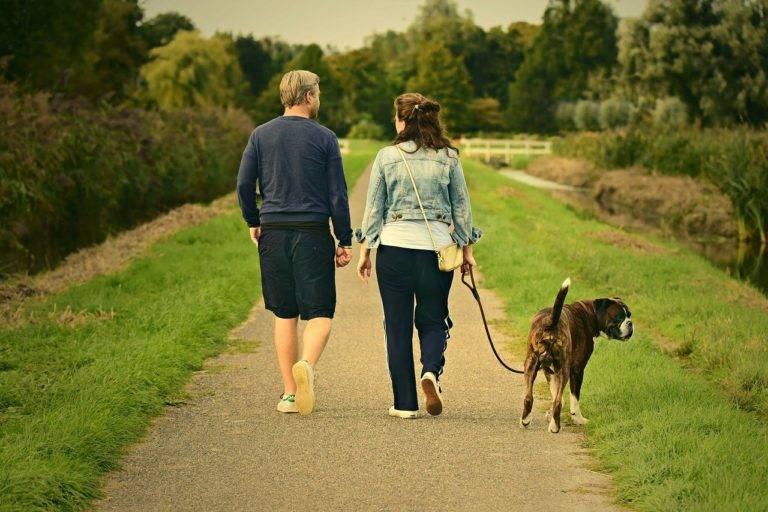 11 способов укоротить жизнь вашей собаки