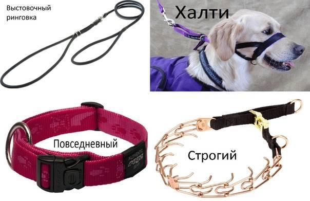 Как сделать поводок для собаки