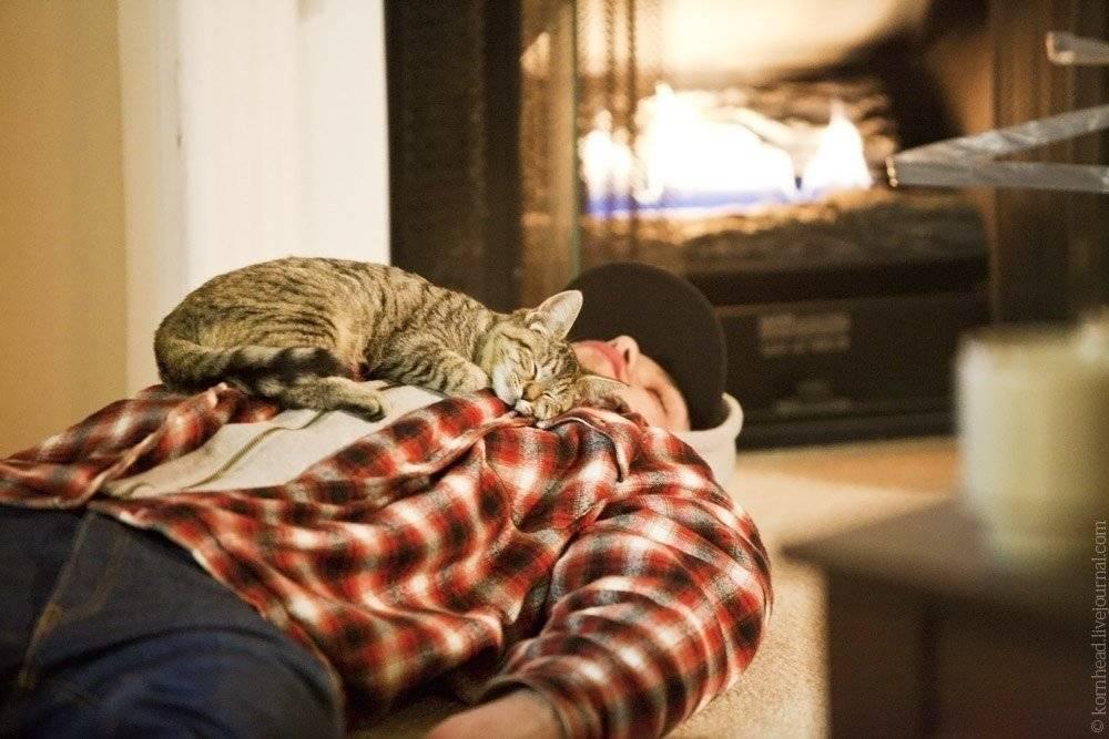 Почему кошка ложится на человека | zoosecrets