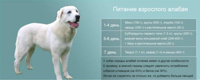 До какого возраста растут собаки и особенности их развития до какого возраста растут собаки и особенности их развития
