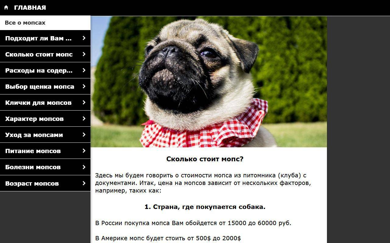 Мопс: фото, описание породы собак, характер, питание и цены