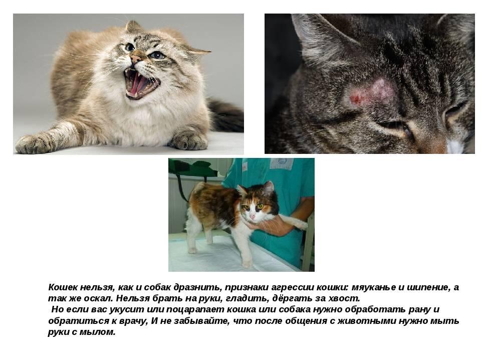 Что будет если целовать кошку: почему это запрещено и как это воспринимают коты