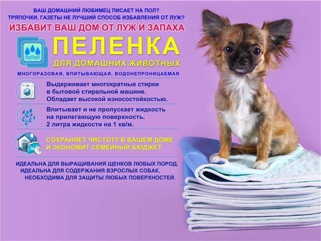 Новый вид туалета, или что такое пеленки для собак