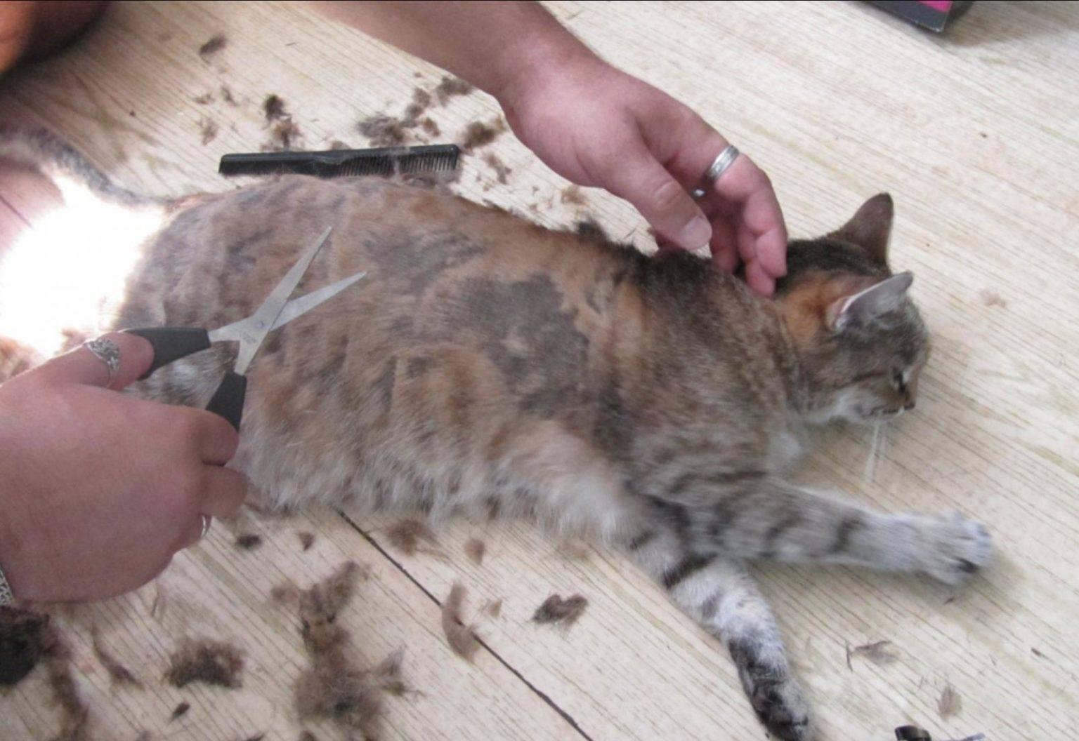 Стрижка кошек и котов