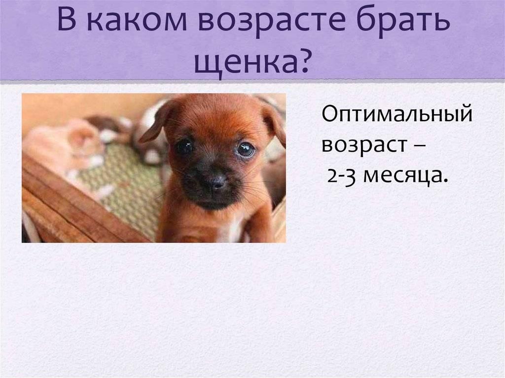 В каком возрасте брать щенка: полезные рекомендации