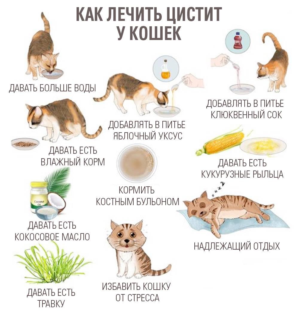 """Заболевания вестибулярного аппарата у кошек - симптомы, лечение вестибулярных нарушений у кошек в москве. ветеринарная клиника """"зоостатус"""""""