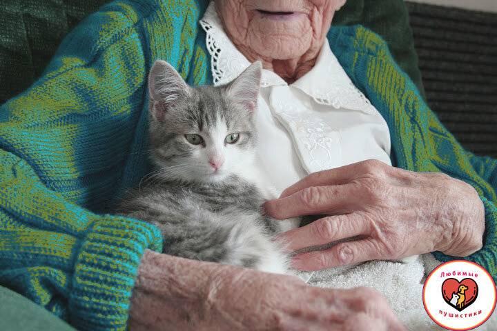 Распространенные возрастные симптомы у пожилых кошек | домашние животные