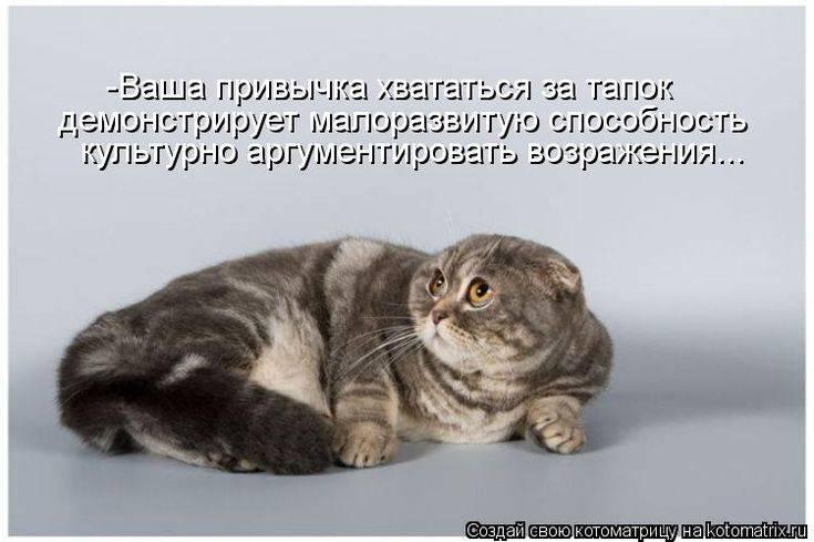 Кошка (кот) постоянно просит есть: причины