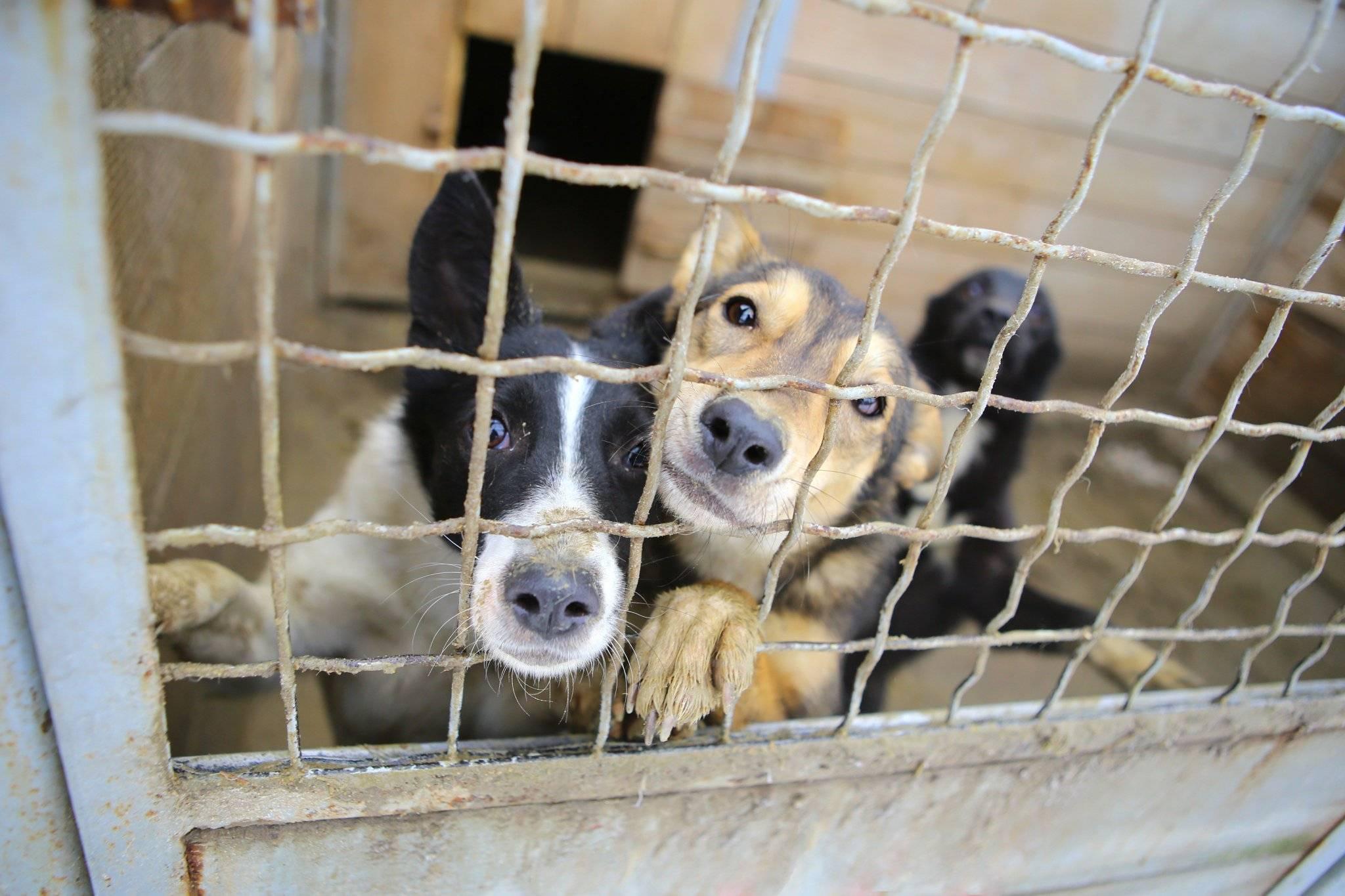 Собаки и кошки в добрые руки - приюты в москве