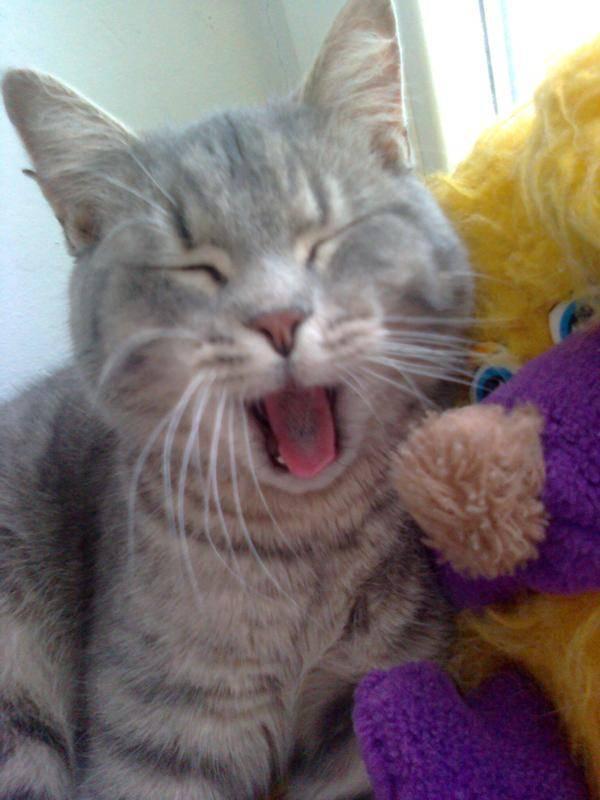 Почему коты показывают язык, высовывают его кончик и не убирают, спят с высунутым язычком и прикусывают его?