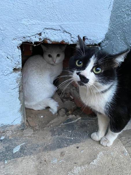 Поведение и характер кошки после стерилизации: как меняется, возможные проблемы (депрессия и агрессия), повышенная ласка и другие особенности