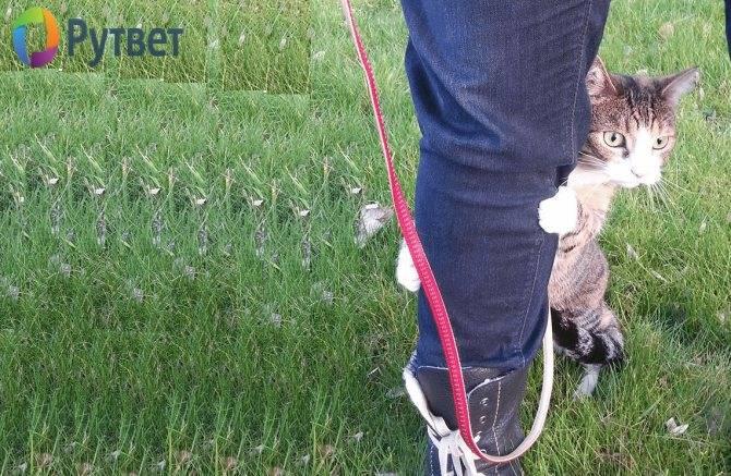 Как приучить кошку к домику - советы от ветеринарной клиники питомец