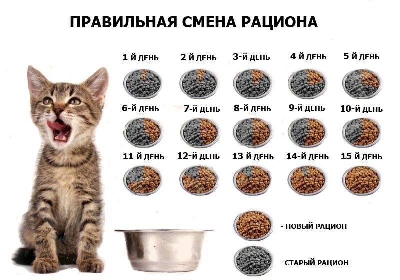 Чем кормить котёнка в 1,2, 3 месяца и старше