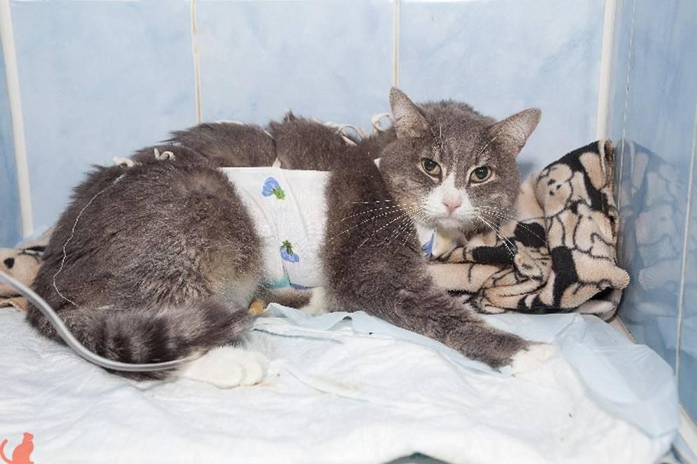 Почечная недостаточность у кошек: симптомы, лечение острой и хронической, причины, профилактика | zoosecrets