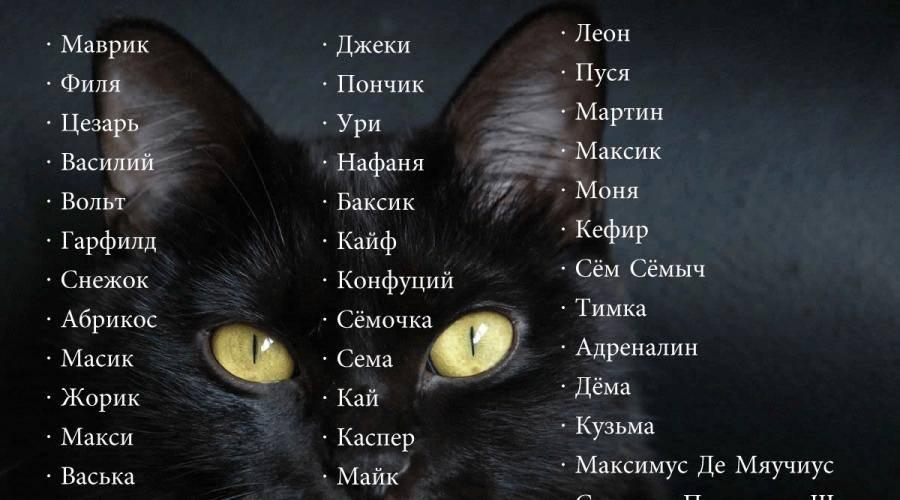 Ласковые клички для котов и кошек