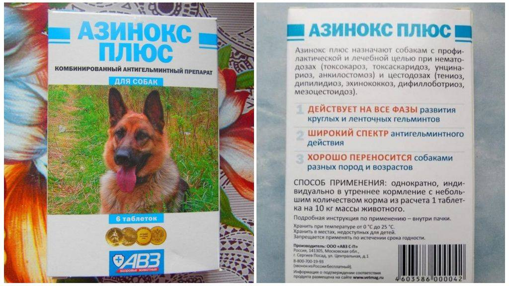 Азинокс для кошек: показания и инструкция по применению, отзывы, цена