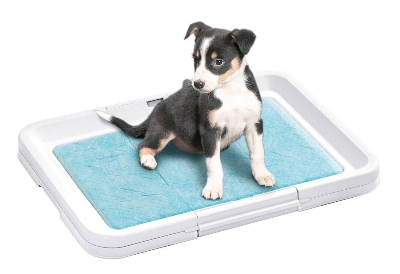 Как приучить собаку к лотку: советы и рекомендации
