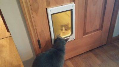 Удобная дверца для кошек в дверь: 4 режима работы
