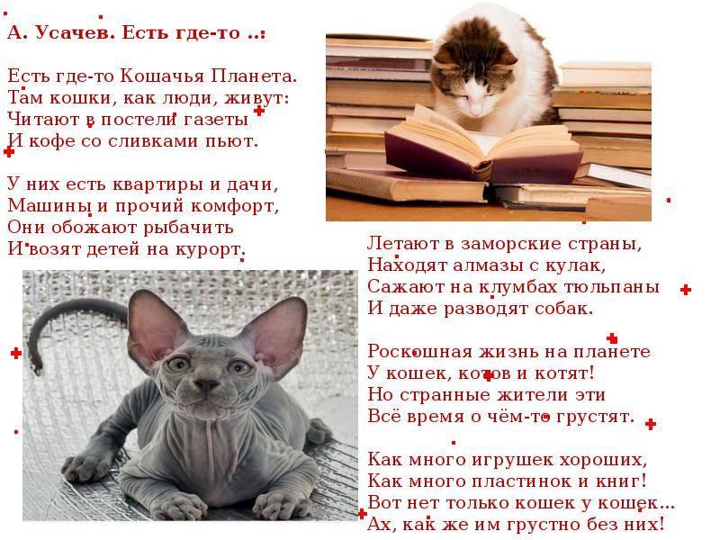 Всемирный день кошек - праздник 8 августа