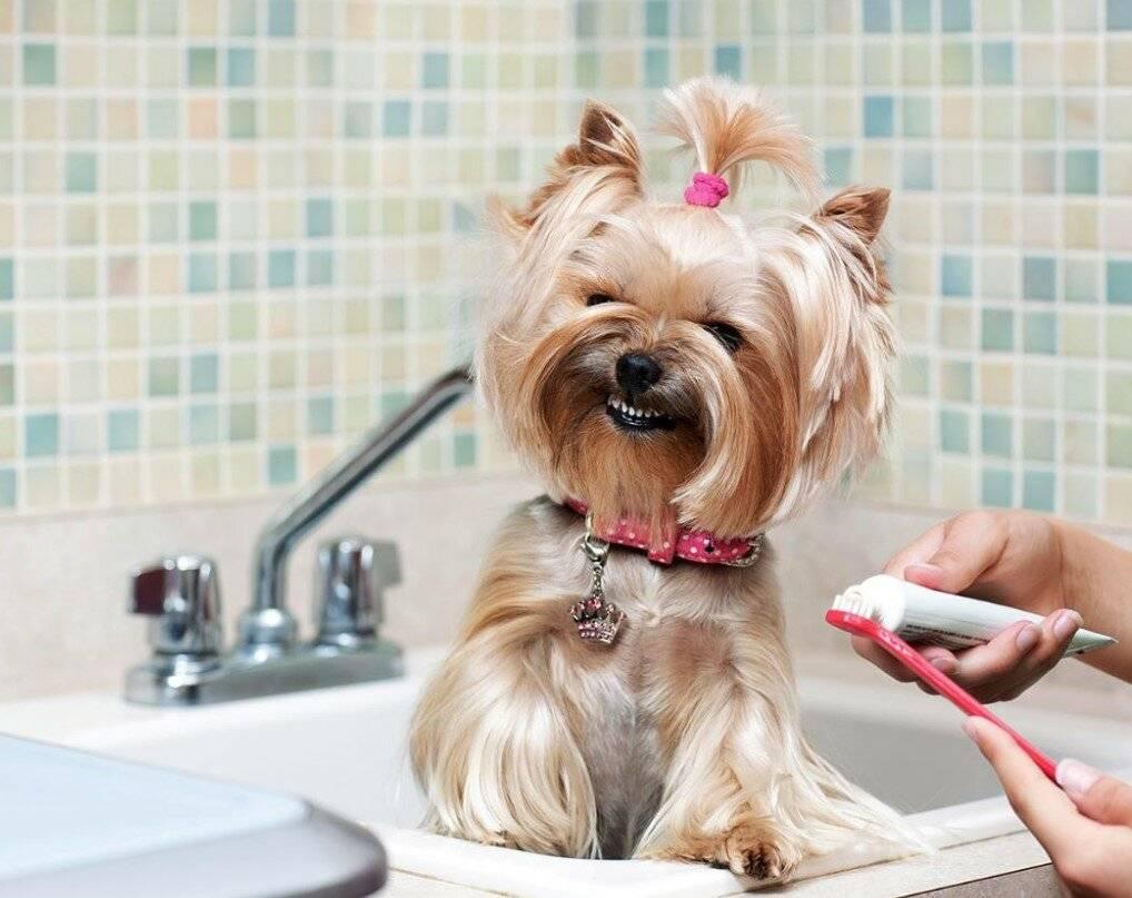Чем лучше всего помыть собаку: инструкция по самостоятельному купанию питомца