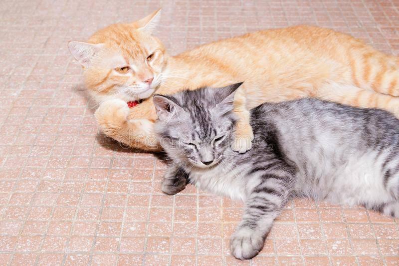 Если вы завели вторую кошку - как познакомить и подружить кошек