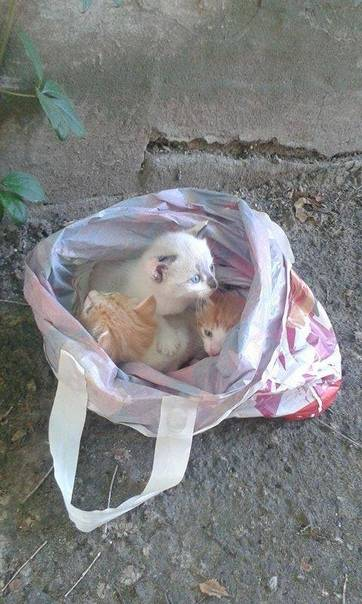 Что делать, если кот съел пакет